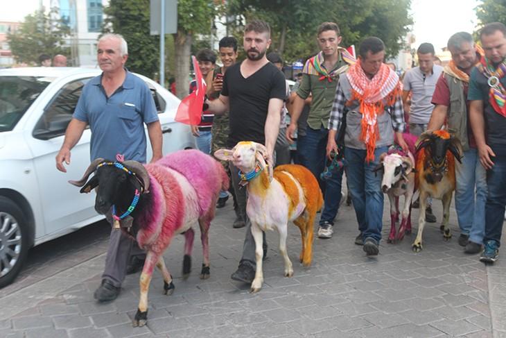Kınalı Koçlar Denizli'ye Geldi