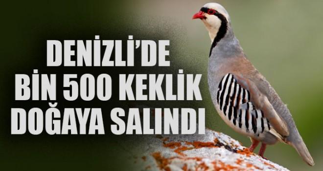 Denizli'de Bin 500 Keklik Doğaya Salındı