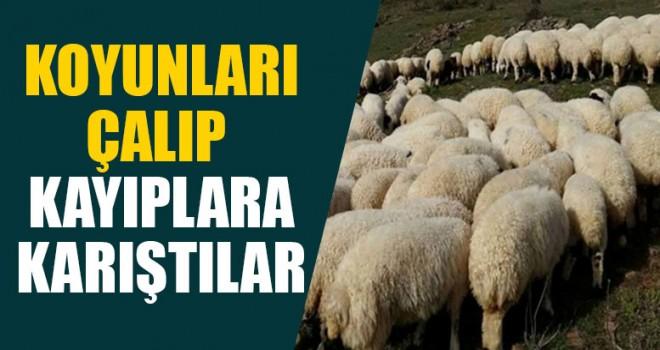 Koyunları Çaldılar