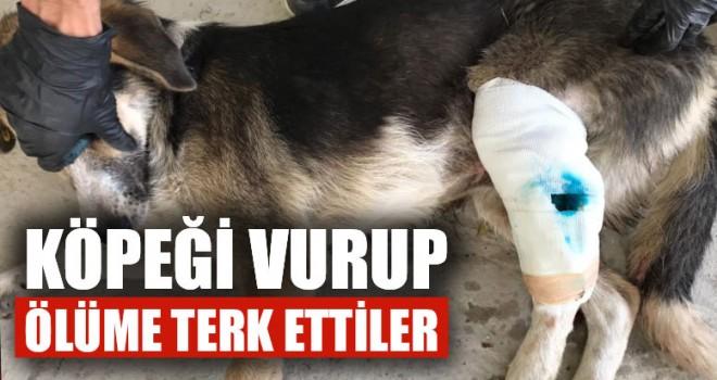 Köpeği Vurup Ölüme Terk Ettiler