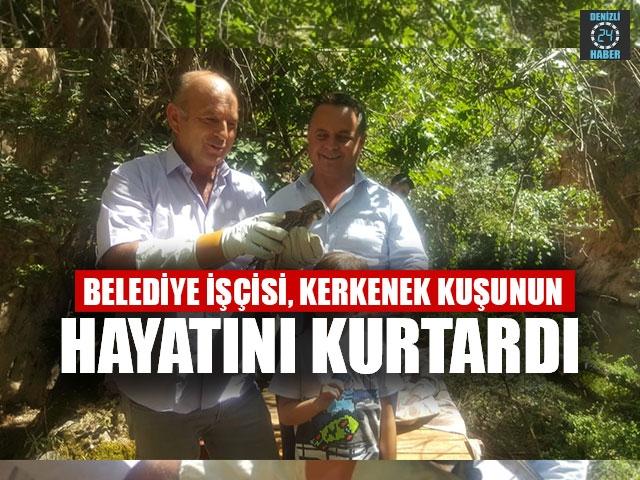 Belediye İşçisi, Kerkenek Kuşunun Hayatını Kurtardı