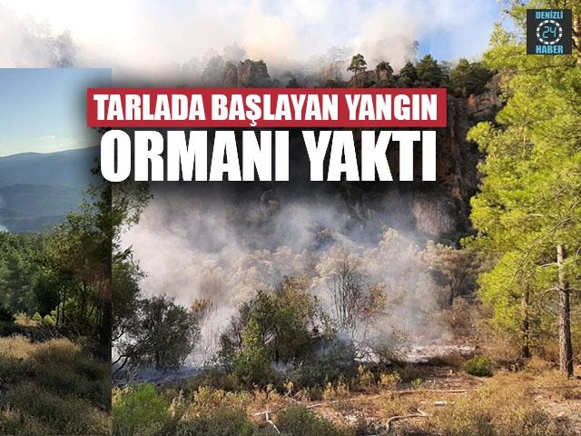 Tarlada Başlayan Yangın Ormanı Yaktı