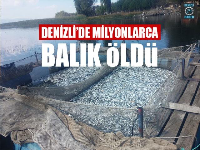 Denizli'de Milyonlarca Balık Öldü