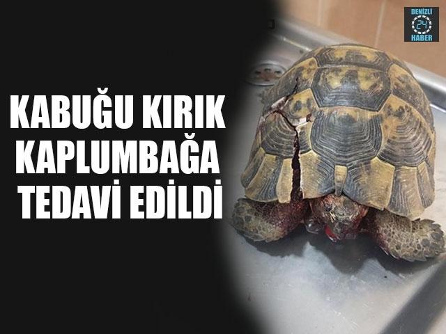 Kabuğu Kırık Kaplumbağa Tedavi Edildi
