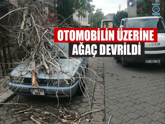 Denizli'de Otomobilin Üzerine Ağaç Devrildi