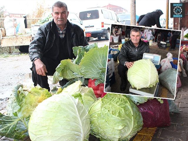 Manisa Alaşehir'deki dev lahana