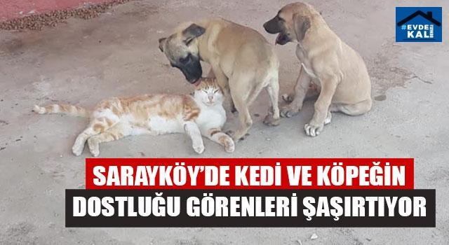 Sarayköy'de Kedi Ve Köpeğin Dostluğu Görenleri Şaşırtıyor