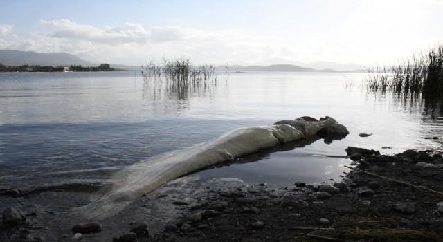 Muğla Köyceğiz gölünde ölü Yayın Balığı sahile vurdu