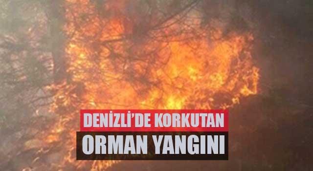 Denizli'de korkutan orman yangını