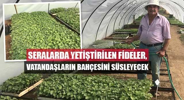 Denizli'de Seralarda yetiştirilen fideler, vatandaşların bahçesini süsleyecek