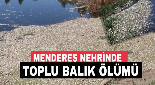 Büyük Menderes'te kirlilik toplu balık ölümüne neden oldu