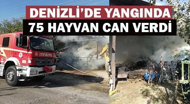 Denizli'de yangında 75 hayvan telef oldu