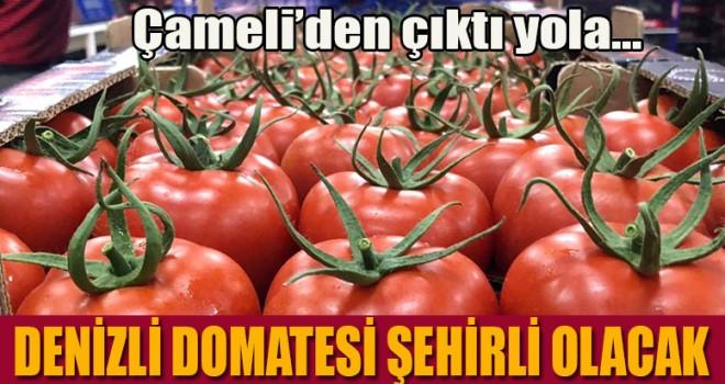 Denizli domatesi şehirli olacak