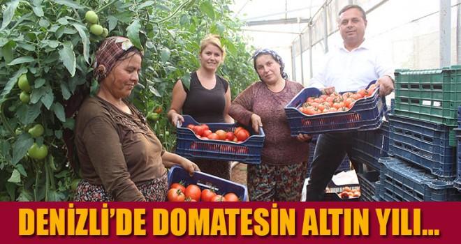 Denizli'de domatesin altın yılı