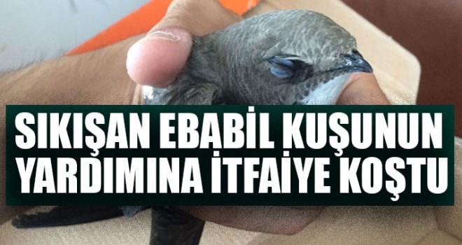 Sıkışan Ebabil Kuşunun Yardımına İtfaiye Koştu