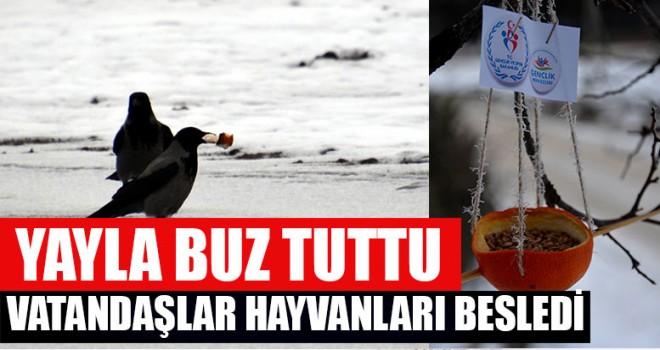 Yayla Buz Tuttu Vatandaşlar Hayvanları Besledi
