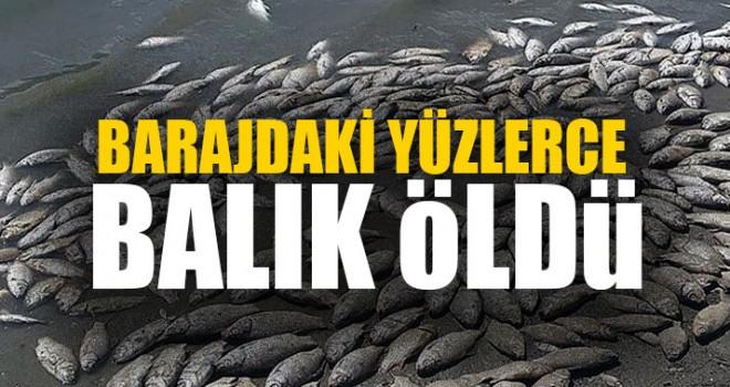 Barajdaki Yüzlerce Balık Öldü