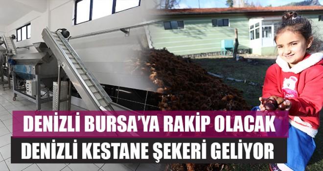 Denizli Bursa'ya Rakip Olacak Denizli Kestane Şekeri Geliyor