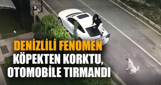 Denizlili Fenomen Köpekten Korktu, Otomobile Tırmandı