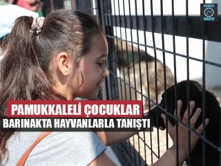 Pamukkaleli Çocuklar Barınakta Hayvanlarla Tanıştı