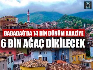 Babadağ'da 14 Bin Dönüm Araziye 6 Bin Ağaç Dikilecek