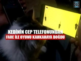 Kedinin Cep Telefonundan Fare İle Oyunu Kahkahaya Boğdu