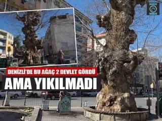 Denizli'de Bu Ağaç 2 Devlet Gördü Ama Yıkılmadı