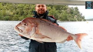 Marmaris'te Erdem Yalçınkaya isimli balıkçık dev trança yakaladı