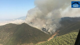 İzmir Balçova'da orman yangını