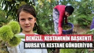 Denizli, Kestanenin Başkenti Bursa'ya Kestane Gönderiyor