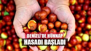 Denizli'de Hünnap (doktor meyvesi) Hasadı Başladı