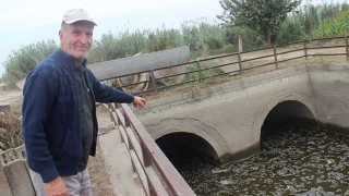 Germencik'te Kanaldan Gelen Su Kesilince Balıklar Telef Oldu