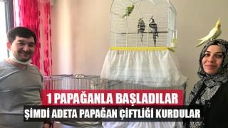 1 papağanla yola çıktılar şimdi adeta papağan çiftliği kurdular