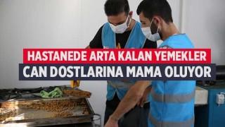 Hastanede arta kalan yemekler can dostlarına mama oluyor