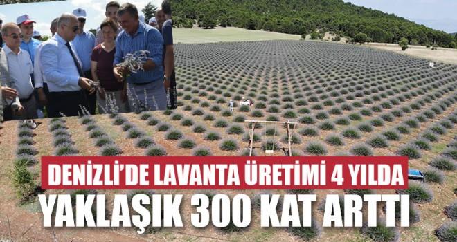 Lavanta Üretimi 4 Yılda Yaklaşık 300 Kat Arttı