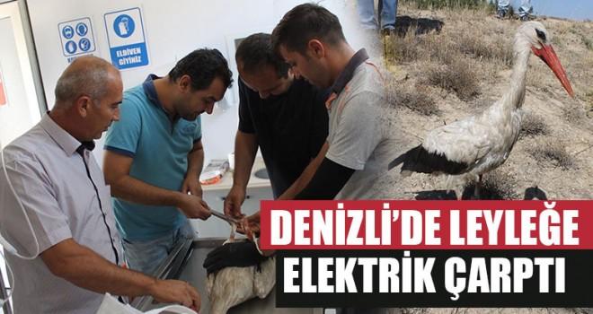 Denizli'de Leyleğe Elektrik Çarptı