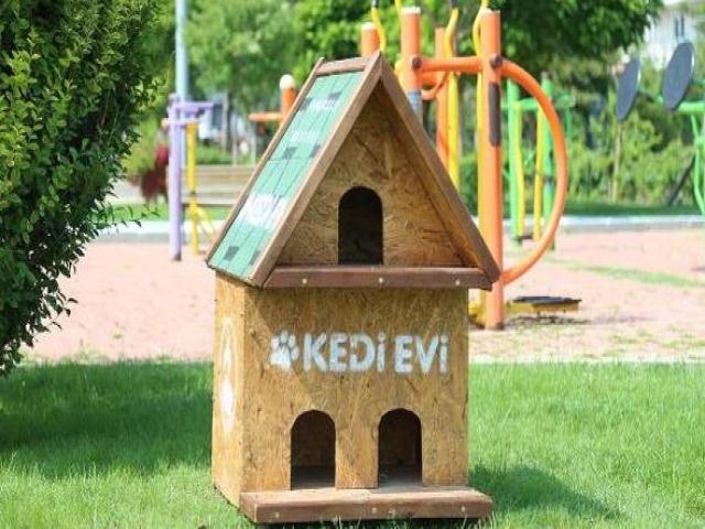 Pamukkale Belediyesi Kedi Evi